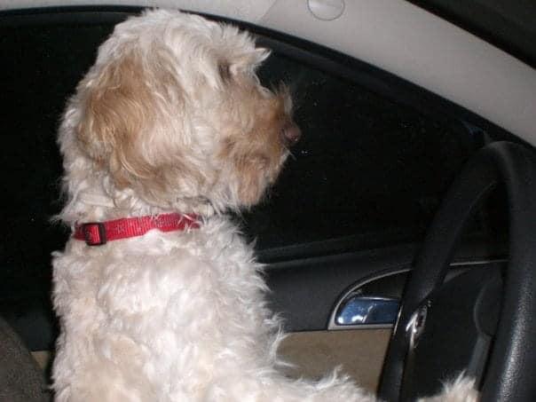Επισκεφτείτε το καταφύγιο σκυλιών